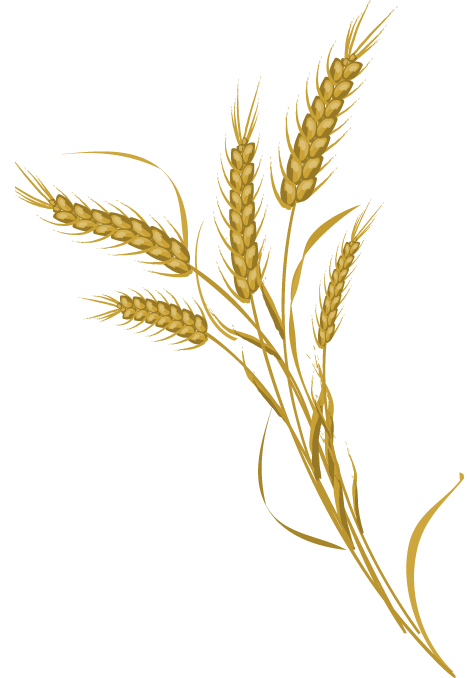 Wheat Bundle Png | www.imgkid.com - The Image Kid Has It!